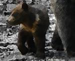 BearsRockD.