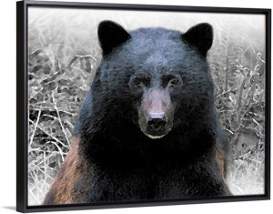 Blk.Bear Framed