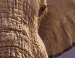 ElephantD.