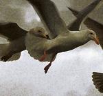 Gulls2.D