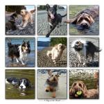 BC.Beach Dogs.