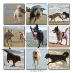Beach Dogs Fun Run.