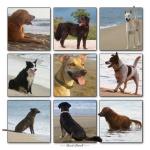 Beach Dogs Patroll.