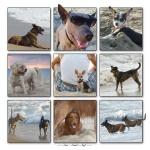 Beach Dogs Sun.