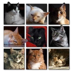 Cats1.