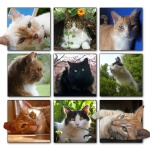Cats2.