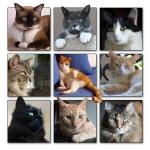 Cats3.