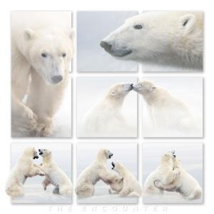PolarBearEncounter.